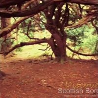 Shorts – Traquair yew forest