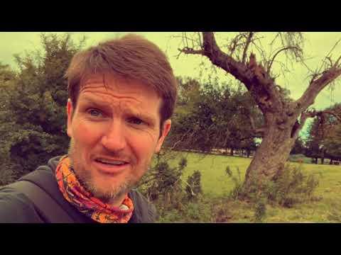 Oldest apple tree in UK??